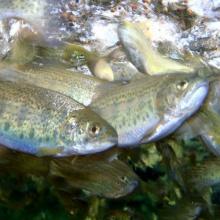 feeding_fish_002