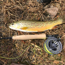Tiger Trout Caught in Big Lake