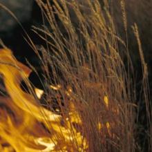 Wildfire in grasses