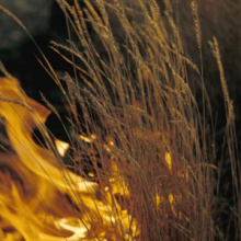 fire in dry grass tight shot small photo