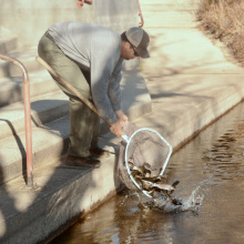 Fish stocking Boise River
