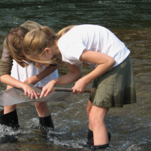 kids looking for insects in the creek by the MK Nature Center