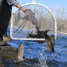 Fish Stocking Boise River 2020-2