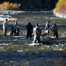 fisheries_crew_shocking_the_south_fork_boise_oct_2020_lowres