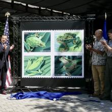 Frog stamps dedication.jpeg
