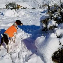 Upland Dog1.jpg