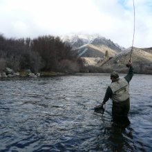 winter trout95qqr.jpg