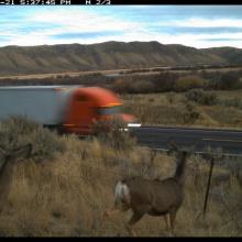 trail_cam_deer Rocky Point.jpg