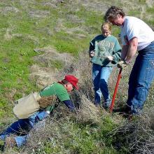 volunteers planting shrubs
