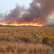 wide shot of the Rogerson fire September 29 2008