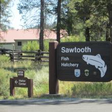 Sawtooth Fish Hatchery signs medium shot July 2015