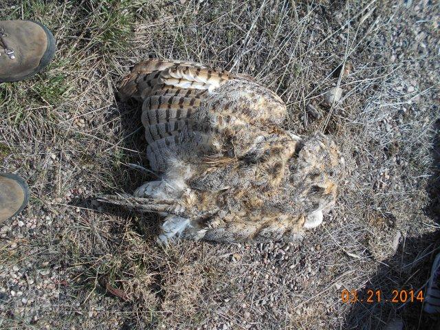 owl - back - I-15 SB MP47.7 3-21-14