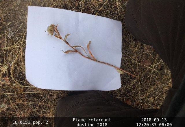 EO-88_EOID-1856584_pop2_PYIN2_3_crop.jpg