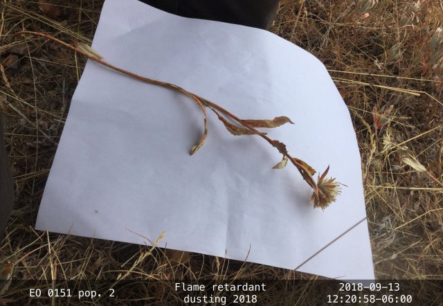 EO-88_EOID-1856584_pop2_PYIN2_4_crop.jpg