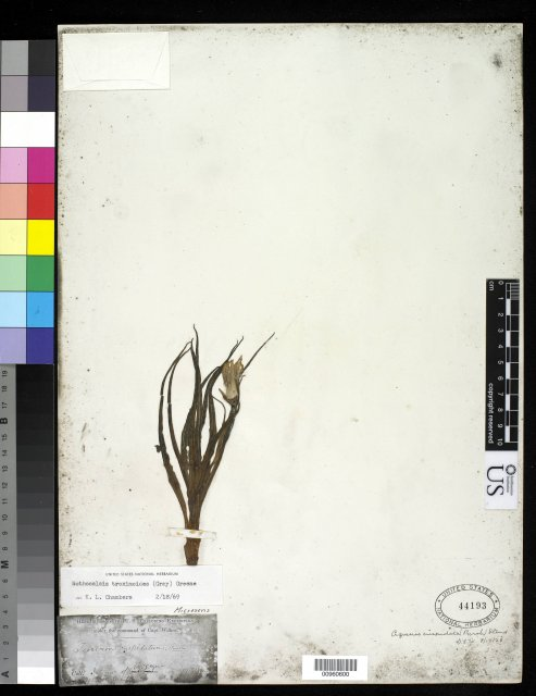 http://collections.mnh.si.edu/search/botany/?irn=10064243