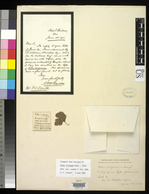 http://collections.mnh.si.edu/search/botany/?irn=2097532