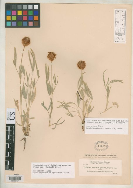 http://collections.mnh.si.edu/search/botany/?irn=2144774