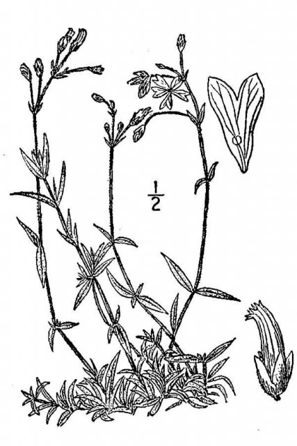 http://plants.usda.gov/java/largeImage?imageID=ceve8_001_avd.tif
