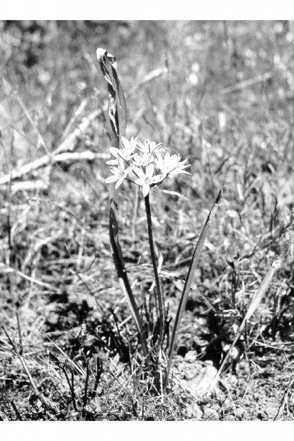http://plants.usda.gov/gallery/large/brhy2_002_lvp.jpg