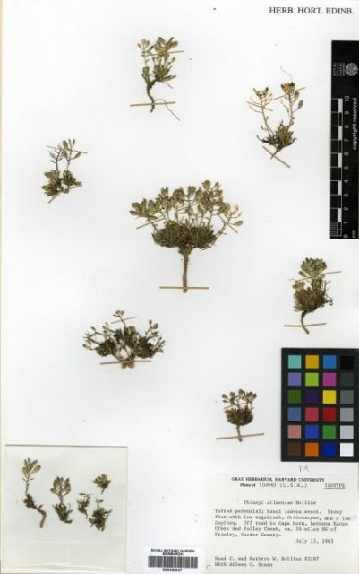 http://elmer.rbge.org.uk/bgbase/vherb/bgbasevherb.php?cfg=bgbase/vherb/bgbasevherb.cfg&specimens_barcode=E00438347