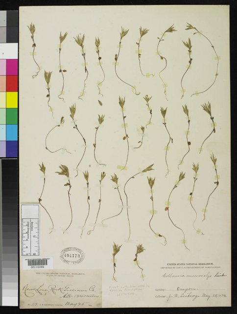 http://collections.mnh.si.edu/search/botany/?irn=2130277