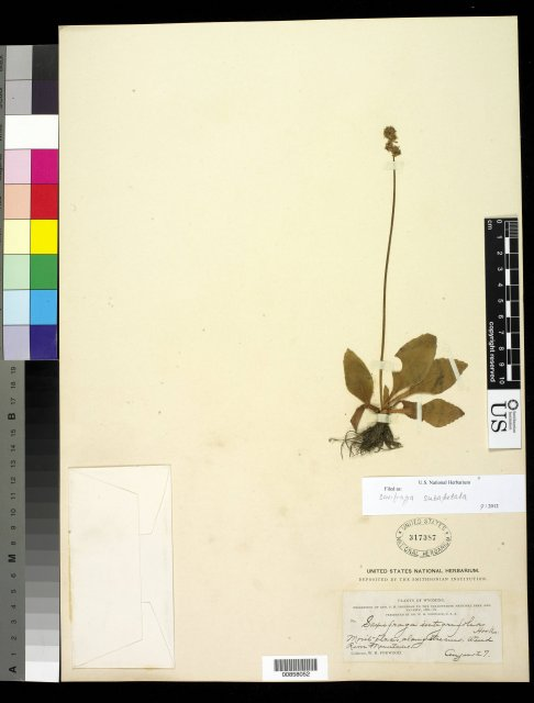 http://collections.mnh.si.edu/search/botany/?irn=10471758