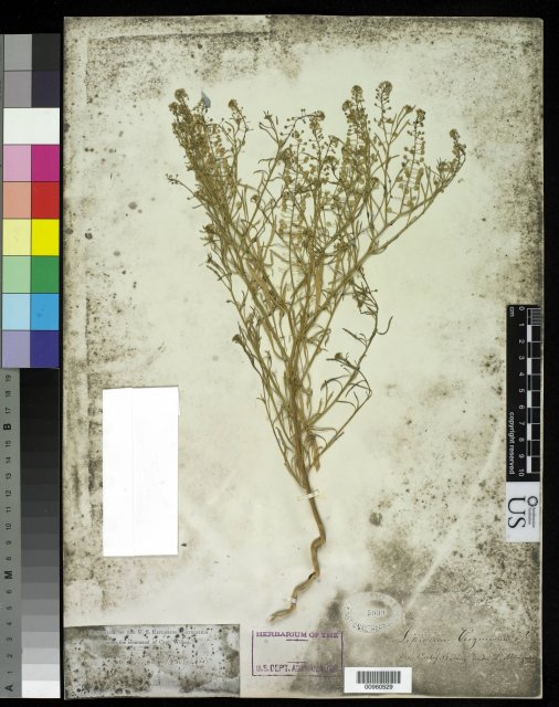 http://collections.mnh.si.edu/search/botany/?irn=10058340