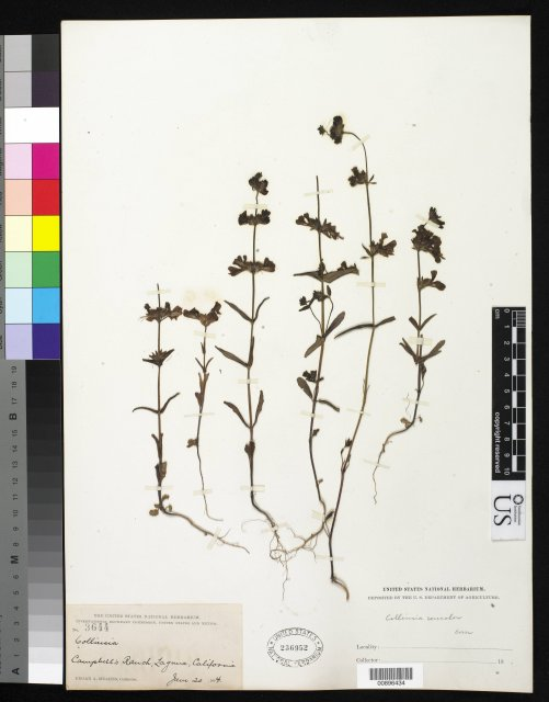 http://collections.mnh.si.edu/services/media.php?env=botany&irn=10282937