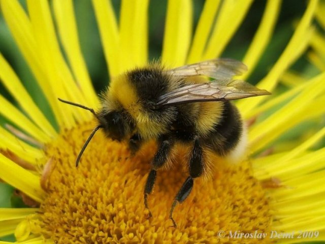 http://www.biolib.cz/en/image/id93876/