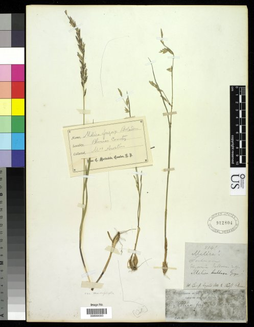 http://collections.mnh.si.edu/services/media.php?env=botany&irn=10212526