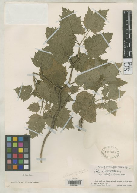 http://collections.mnh.si.edu/search/botany/?irn=2089719
