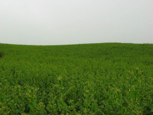 http://plantsoftibet.lifedesks.org/image/view/1589/_original