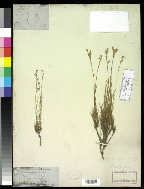 http://collections.mnh.si.edu/search/botany/?irn=10058011