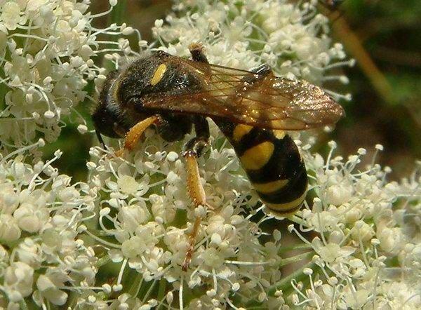 http://www.biolib.cz/en/image/id1417/