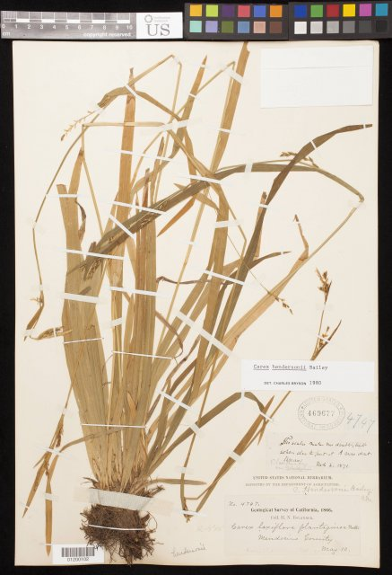 http://collections.mnh.si.edu/search/botany/?irn=11060005