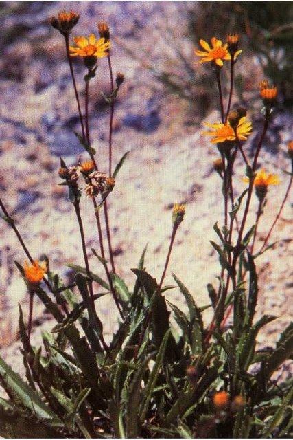 http://plants.usda.gov/java/largeImage?imageID=hala2_001_avp.tif