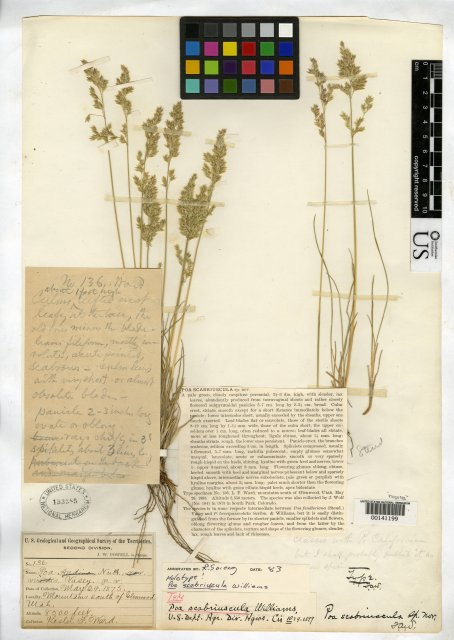 http://collections.mnh.si.edu/search/botany/?irn=2138639