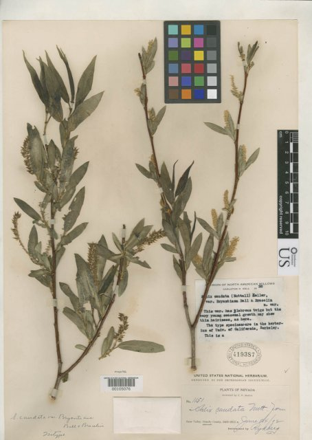 http://collections.mnh.si.edu/search/botany/?irn=2131987