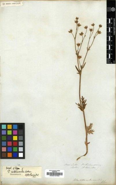 http://elmer.rbge.org.uk/bgbase/vherb/bgbasevherb.php?cfg=bgbase/vherb/bgbasevherb.cfg&specimens_barcode=E00010763
