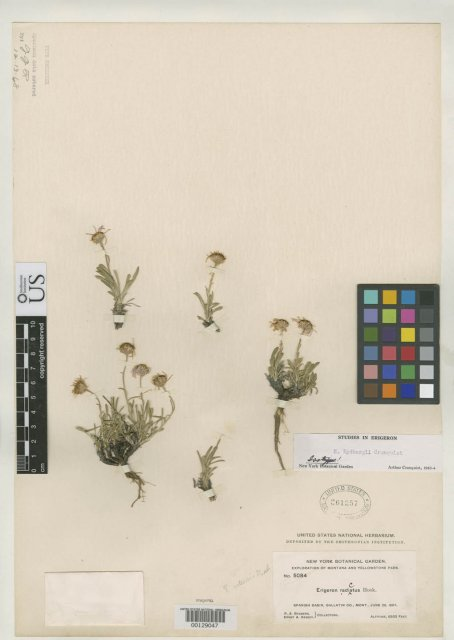 http://collections.mnh.si.edu/services/media.php?env=botany&irn=10097046