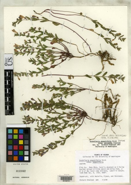 http://collections.mnh.si.edu/search/botany/?irn=2135988