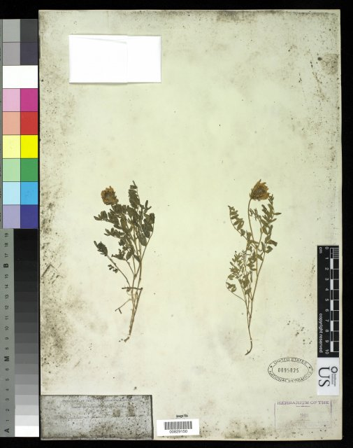 http://collections.mnh.si.edu/services/media.php?env=botany&irn=10213098