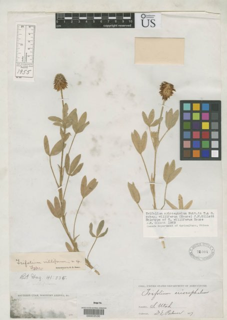 http://collections.mnh.si.edu/search/botany/?irn=2091057
