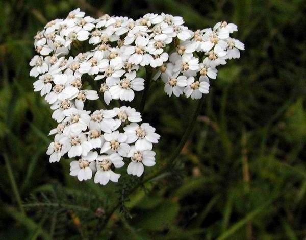 http://www.biolib.cz/en/image/id310/