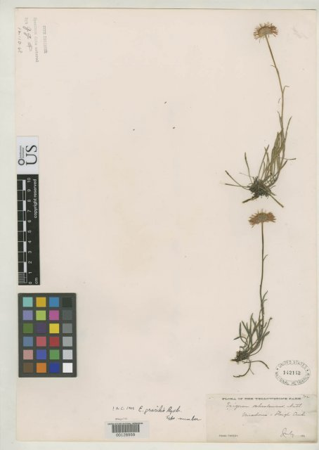 http://collections.mnh.si.edu/search/botany/?irn=2104295