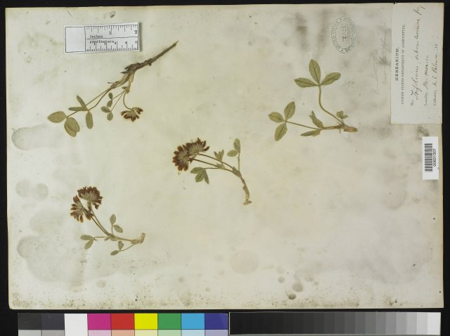 http://collections.mnh.si.edu/search/botany/?irn=10142270