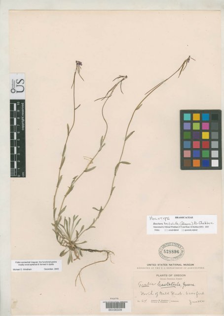 http://collections.mnh.si.edu/services/media.php?env=botany&irn=10102702