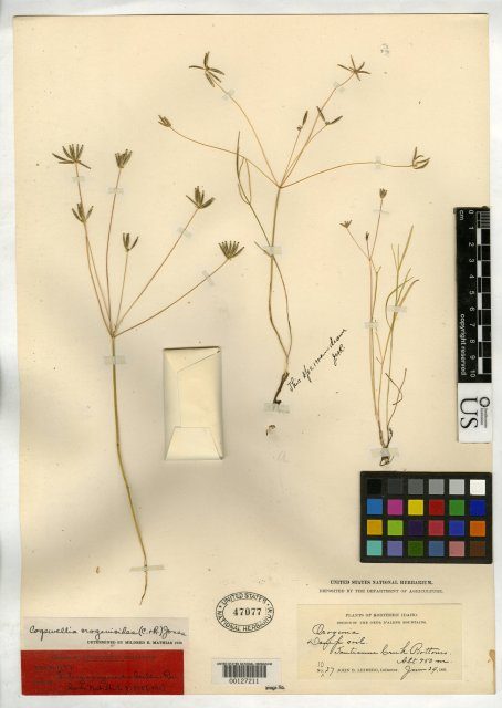 http://collections.mnh.si.edu/search/botany/?irn=10077945