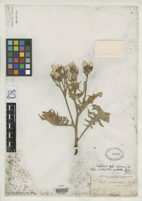 http://collections.mnh.si.edu/search/botany/?irn=2077150