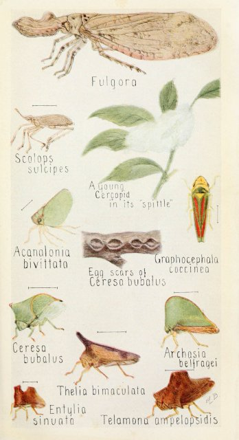 http://www.flickr.com/photos/biodivlibrary/6243849229/